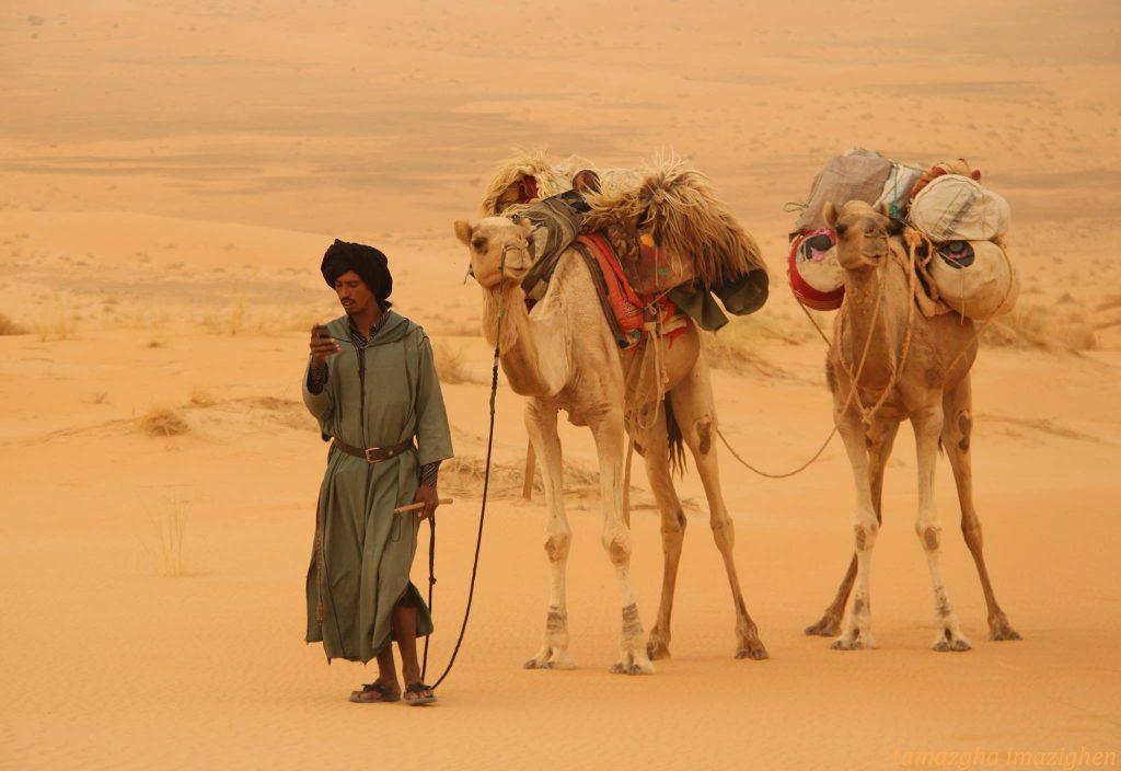 Merzouga Camel Treks,