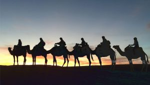 Morocco Camel Trekking is the best Morocco Activity.